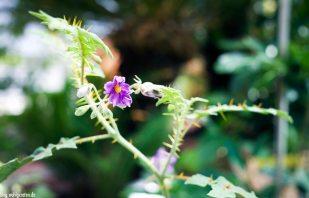 Pflanze – Zitrusgarten – Faak am See