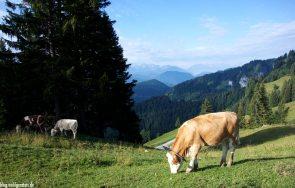 Landwirtschaft Bruneck