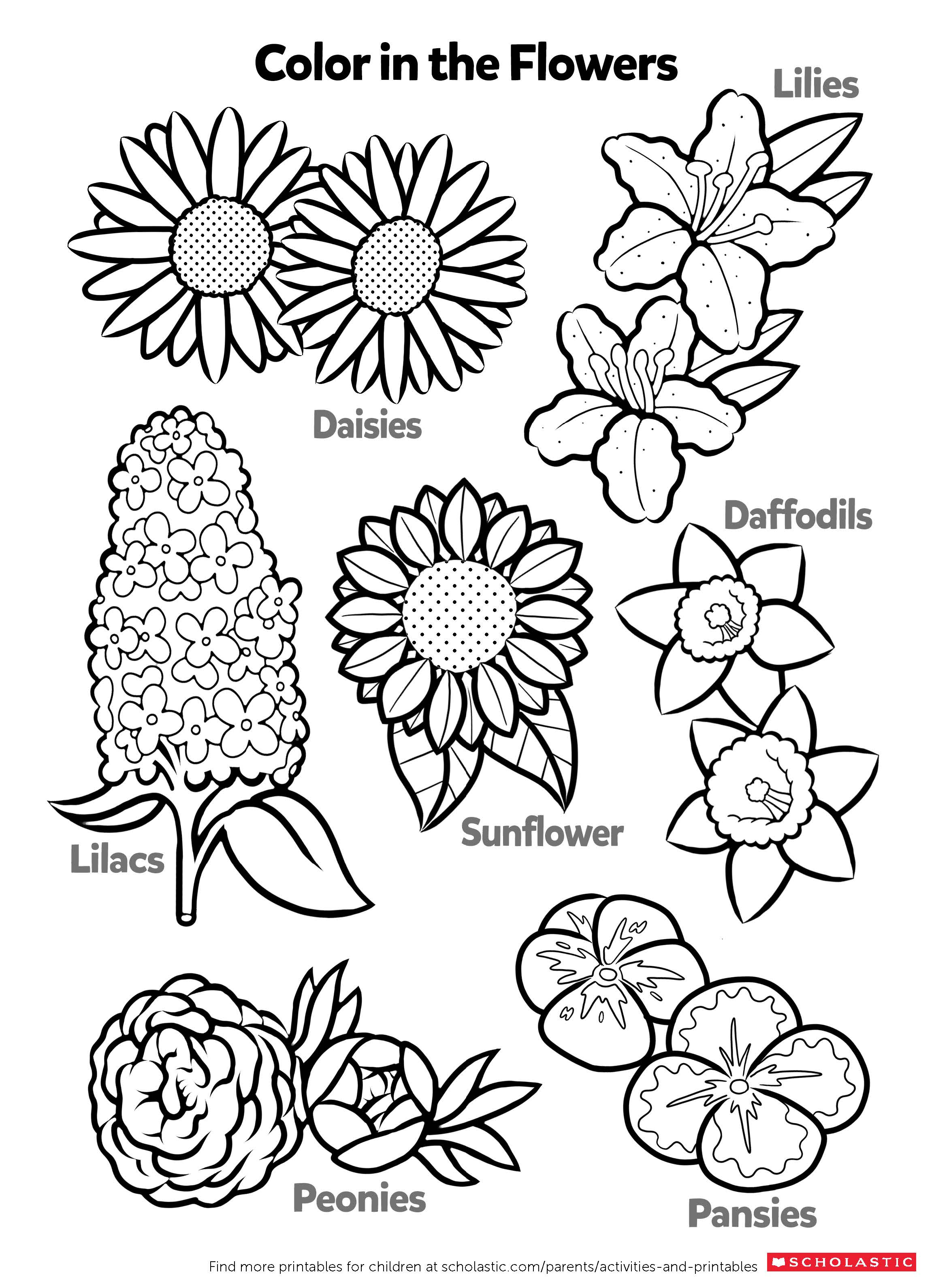 Flower Worksheets For Kids