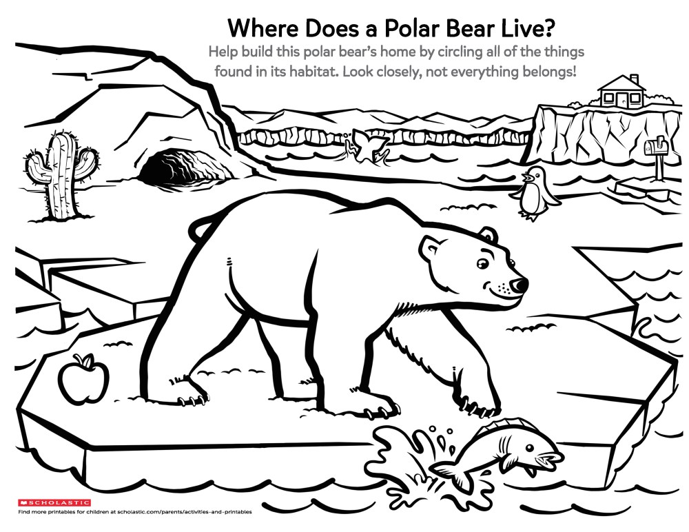medium resolution of Learn About a Polar Bear's Home   Worksheets \u0026 Printables   Scholastic    Parents