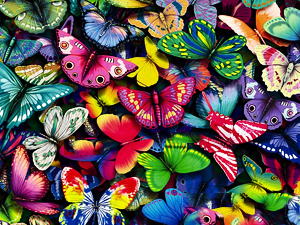 Answers to Kids' Questions About Butterflies | Scholastic