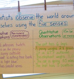 Mystery Bags to Develop Observation and Inference Skills   Scholastic [ 936 x 1280 Pixel ]