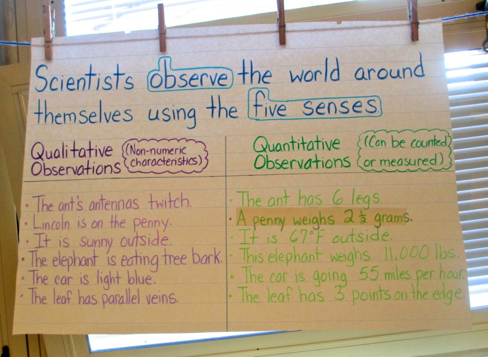 medium resolution of Mystery Bags to Develop Observation and Inference Skills   Scholastic