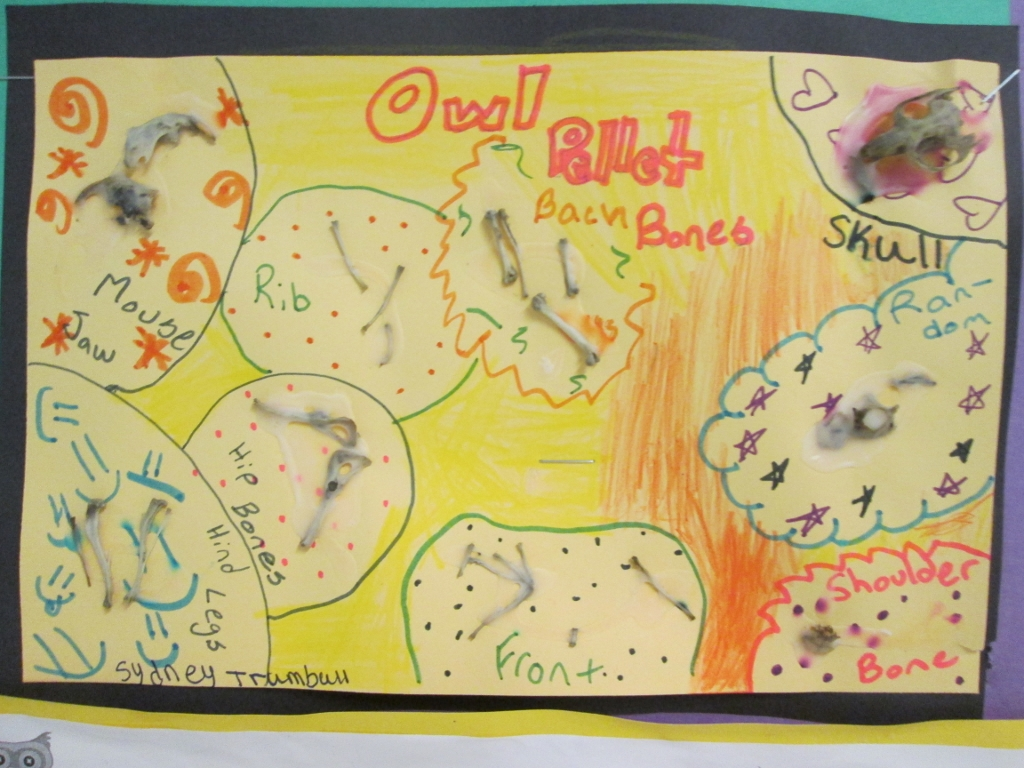 Owls Across The Curriculum From Books To Pellet