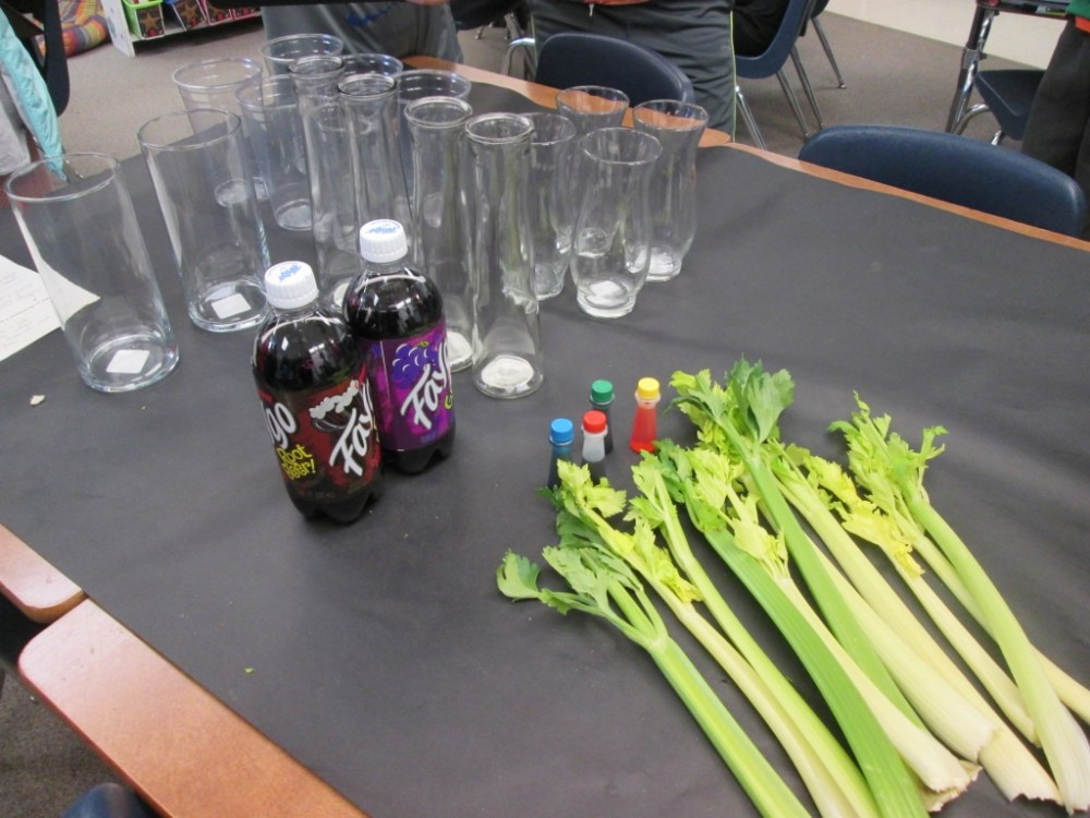 medium resolution of Celery Science: Kids Design Their Own Experiments   Scholastic