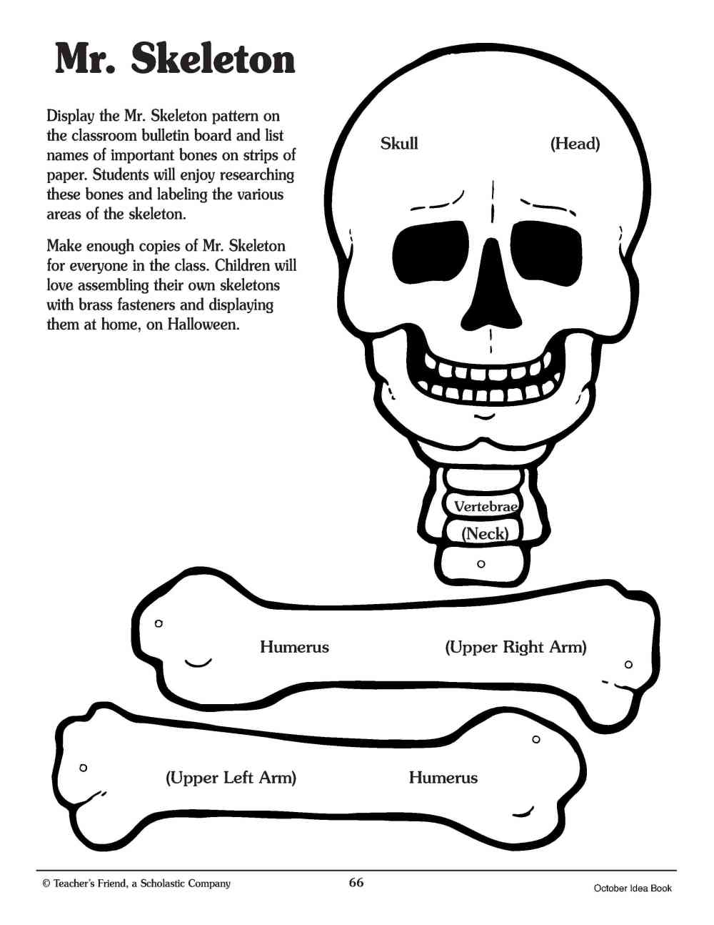 medium resolution of Crafty Symmetric Skeletons   Scholastic