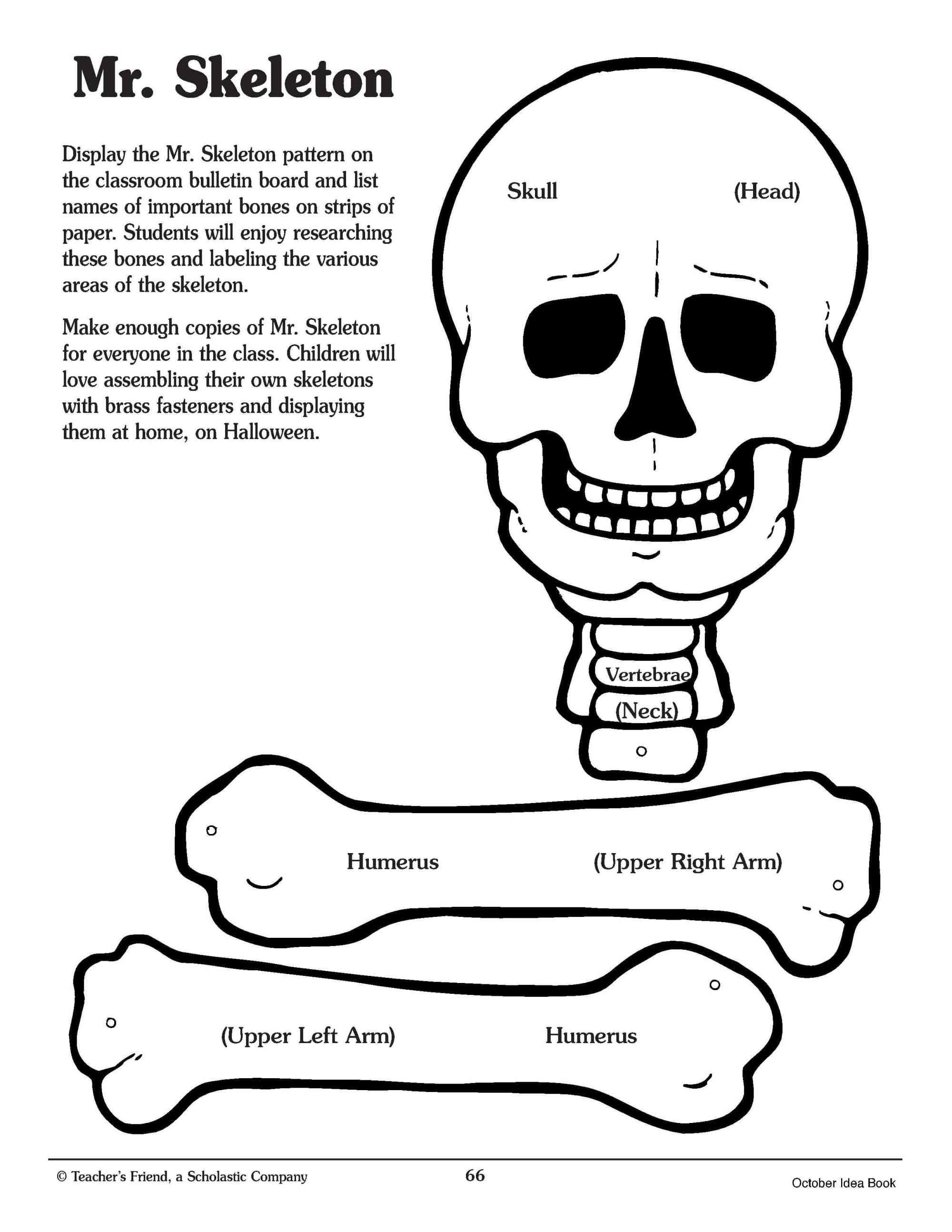 hight resolution of Crafty Symmetric Skeletons   Scholastic