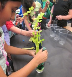 Celery Science: Kids Design Their Own Experiments   Scholastic [ 1024 x 768 Pixel ]