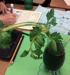 Celery Science: Kids Design Their Own Experiments   Scholastic [ 1936 x 1936 Pixel ]