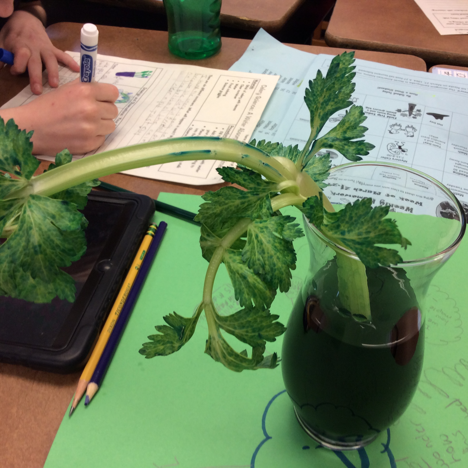 hight resolution of Celery Science: Kids Design Their Own Experiments   Scholastic