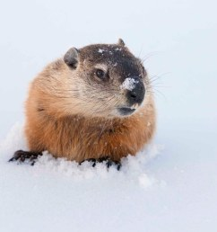 Groundhog Day: 15 Fun Teaching Resources   Scholastic [ 1414 x 1885 Pixel ]