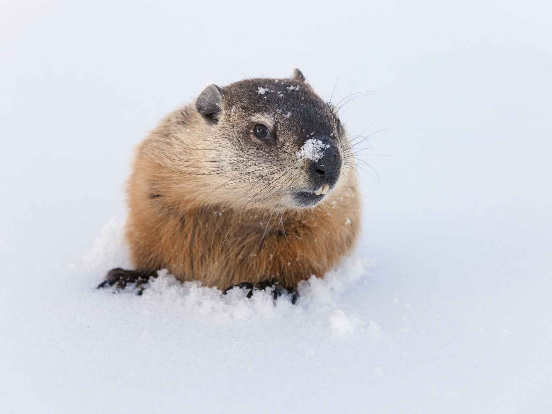 hight resolution of Groundhog Day: 15 Fun Teaching Resources   Scholastic