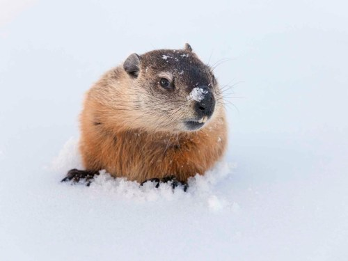 small resolution of Groundhog Day: 15 Fun Teaching Resources   Scholastic