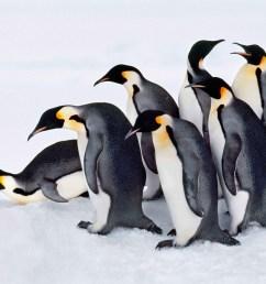 Meet the Penguins!   Scholastic [ 1707 x 2276 Pixel ]