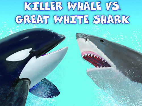 great white shark food chain diagram trailer wiring 4 way plug who would win killer whale vs teaching guide scholastic