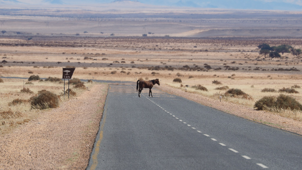 Wildpferd bei aus in Namibia