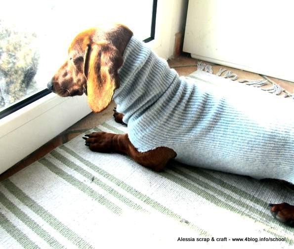 Superfreddo Maglioncini per cani fai da te e senza cucire