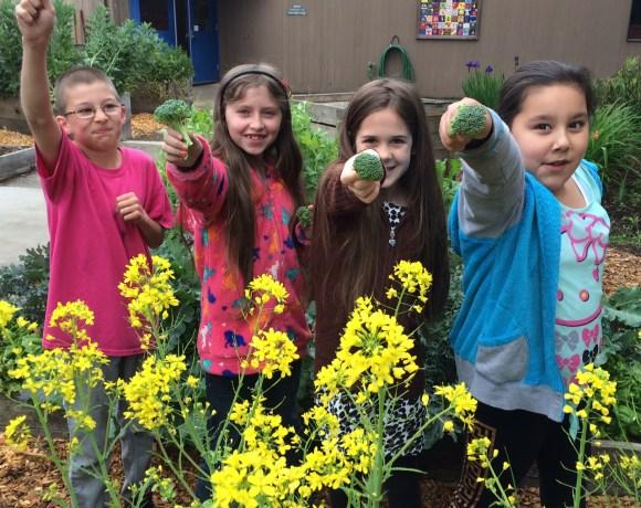 15 years of school garden education