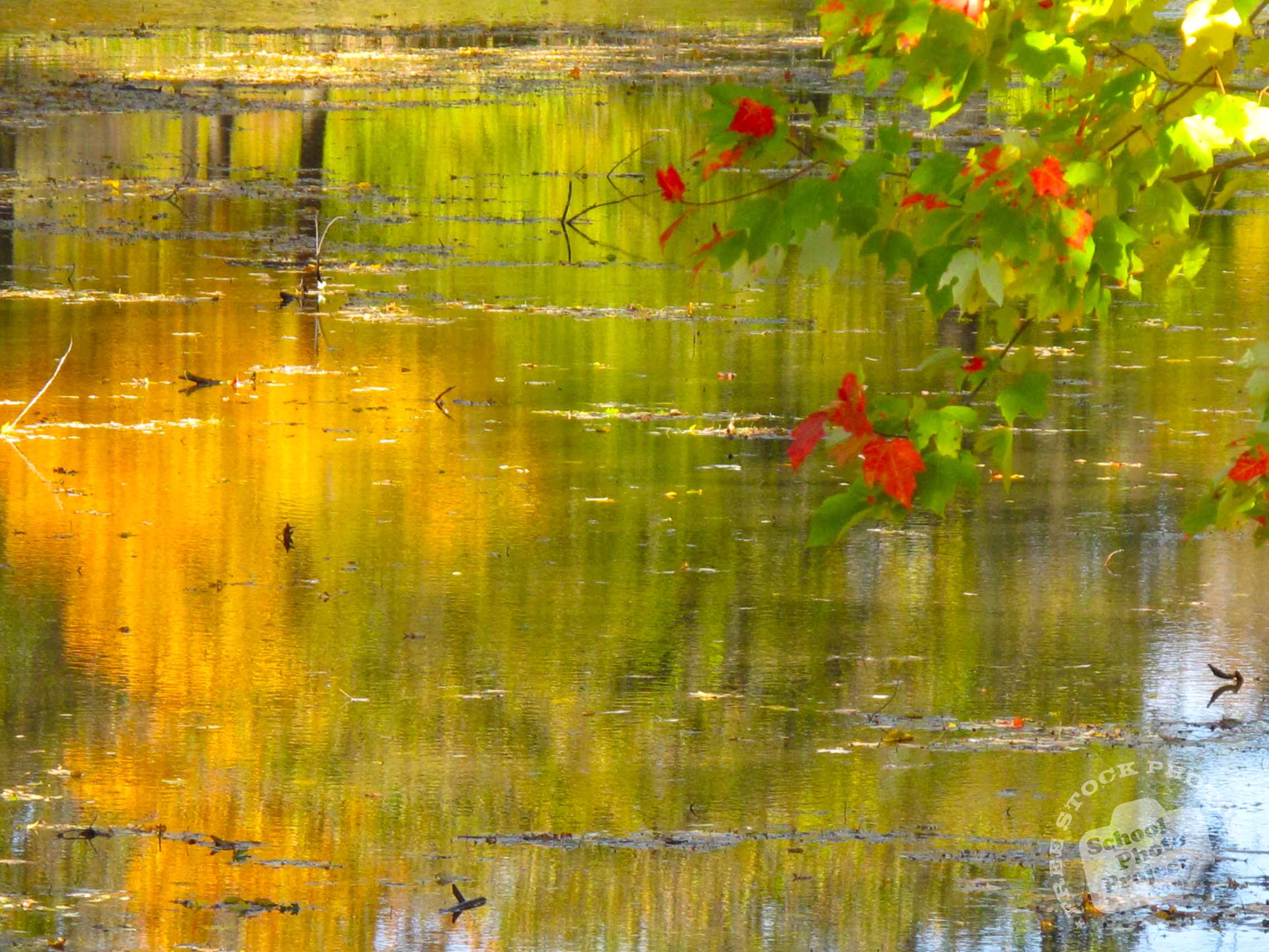 Free Fall Desktop Wallpaper For Mac Free Water Reflection Photo Fall Foliage Picture Autumn