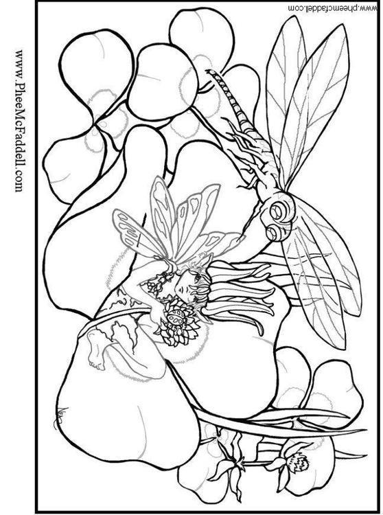 Kleurplaat Libelle Afb 6110