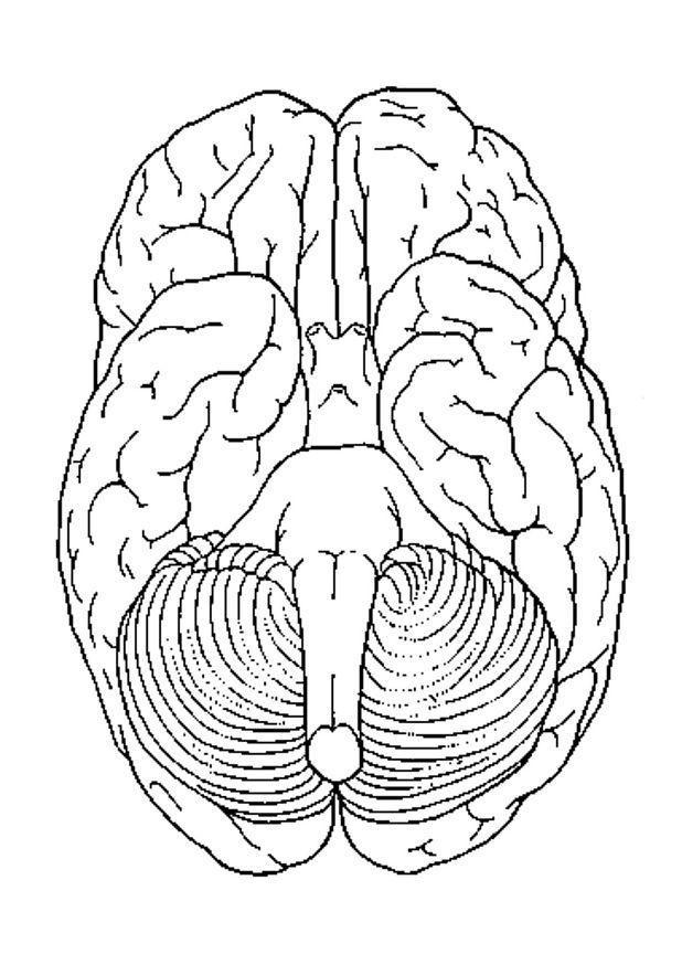 Kleurplaat hersenen onder. Gratis kleurplaten om te printen.