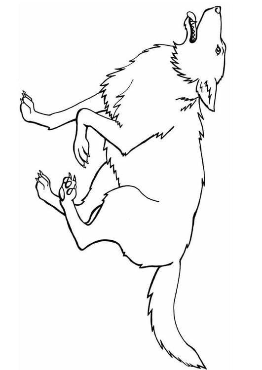 Lobos Dibujos