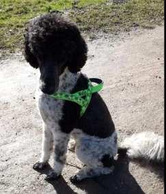 Hund mit gruenem Holster