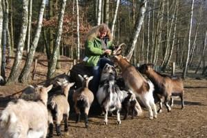 """""""Zickenliebe"""": """"Ich verteile meine Liebe ganz gerecht auf alle Tiere, auch auf die kleinen Ziegen"""", erklärt Imke Heyter. Wer den Wildpark besucht, für den empfiehlt sich festes Schuhwerk und ein Fernglas. Der Rundgang dauert mindestens 2 Stunden. Ganztägig gibt's hier im Restaurant warme Küche., Foto: Lutz Reinhardt"""
