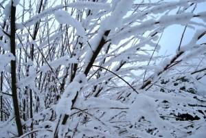 Schneezweige Foto: pe