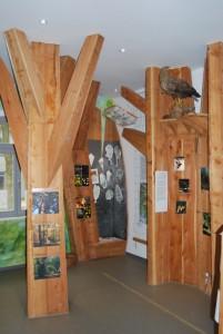 In der Ausstellung im Bahnhofsgebäude wird über Themenbäume das große Waldlabor in der Schorfheide erklärt. Es ist ein erster Einstieg. Wer mehr wissen will, pilgert weiter ins Schorfheidemuseum.