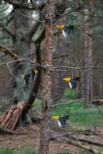 Sprüche-Vögel im Kunstwald bei Klein Dölln, längst vom Winde verweht . Foto: pe