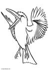 Malvorlagen Vögel 65 Ausmalbilder