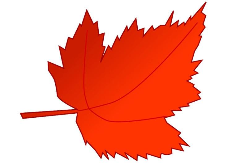 Bild Herbstblatt - Kostenlose Bilder Zum Ausdrucken - Bild