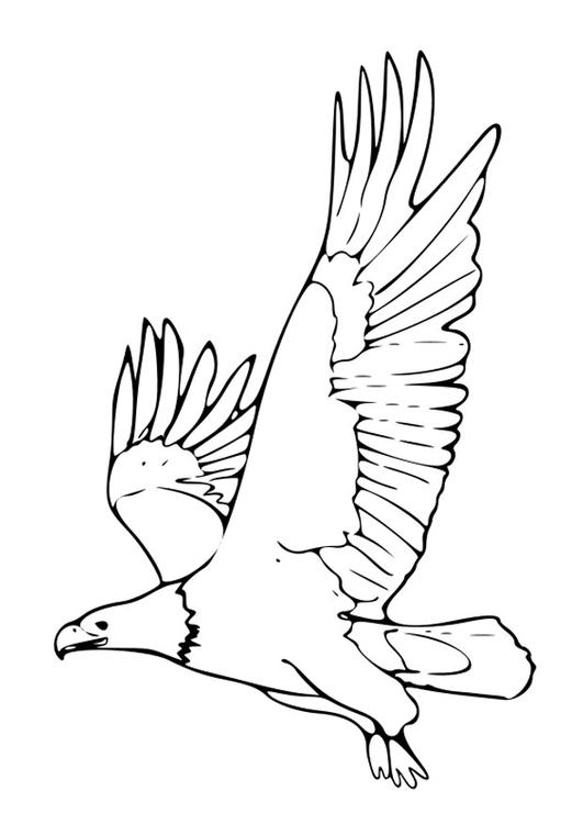 Malvorlage Adler - Kostenlose Ausmalbilder Zum Ausdrucken