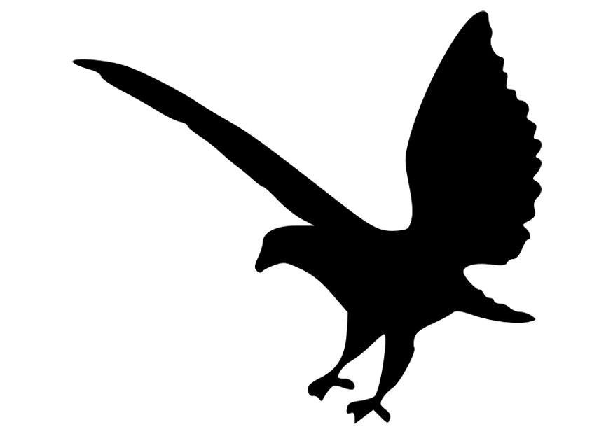 Malvorlage Adler Silhuette - Kostenlose Ausmalbilder Zum