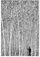 Malvorlage Bambus   Kostenlose Ausmalbilder Zum Ausdrucken.