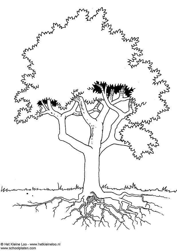 Malvorlage Baum Ausmalbild 3724