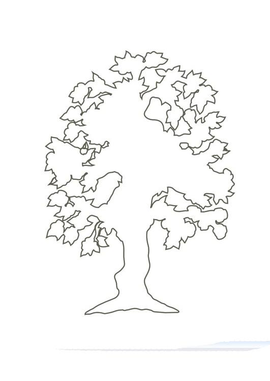 Malvorlage Baum - Kostenlose Ausmalbilder Zum Ausdrucken