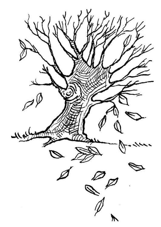 Malvorlage Baum im Herbst Ausmalbild 7581