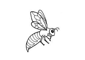 Malvorlage Biene   Kostenlose Ausmalbilder Zum Ausdrucken ...
