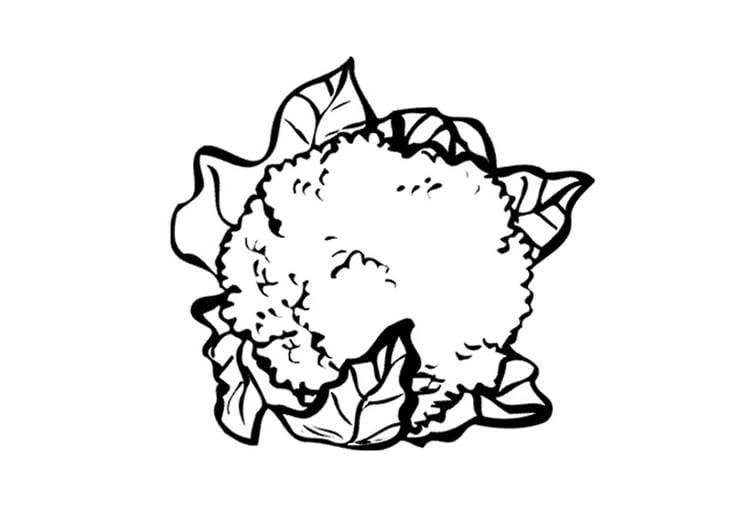Malvorlage Blumenkohl - Kostenlose Ausmalbilder Zum