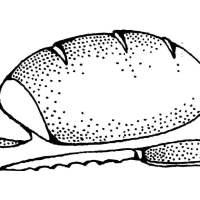 Malvorlage Brot   Ausmalbild 17333.