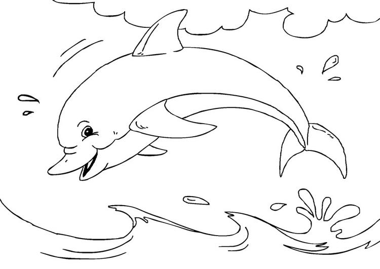 Malvorlage Delfin - Kostenlose Ausmalbilder Zum Ausdrucken