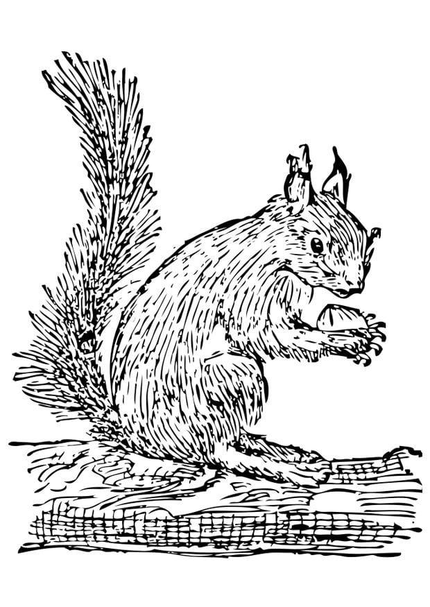 Malvorlage Eichhörnchen - Kostenlose Ausmalbilder Zum