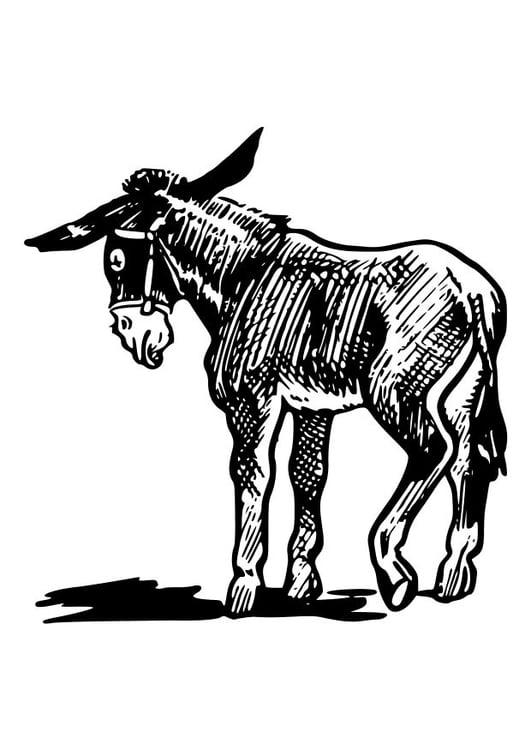 Malvorlage Esel Ausmalbild 10547
