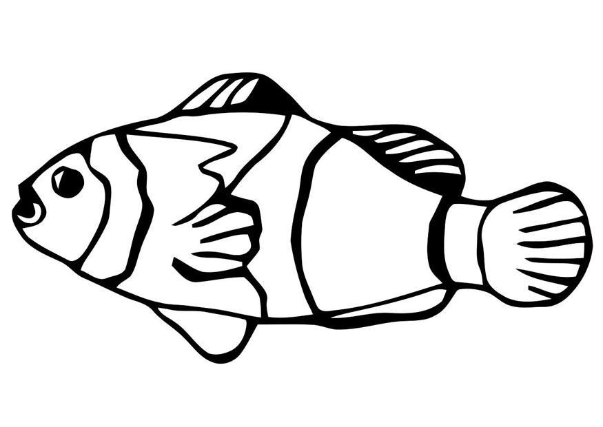 Malvorlage Fisch - Goldfisch - Kostenlose Ausmalbilder Zum