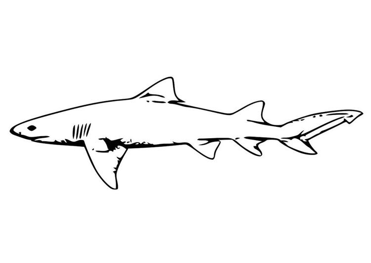 Malvorlage Fisch - Hai Ausmalbild 20689