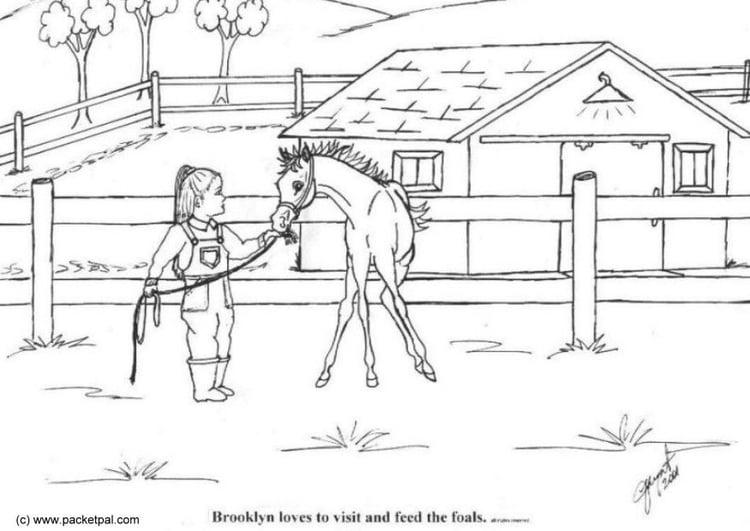 Malvorlage Fohlen - Kostenlose Ausmalbilder Zum Ausdrucken