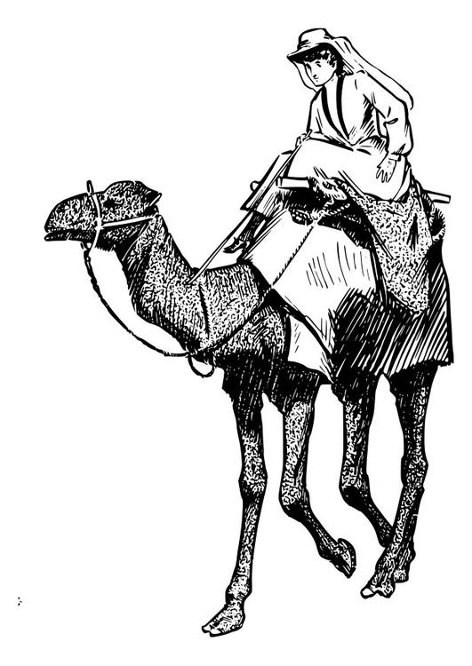 Malvorlage Frau auf Kamel - Kostenlose Ausmalbilder Zum