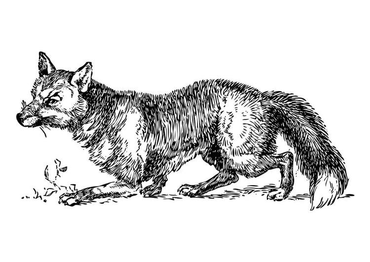 Malvorlage Fuchs - Kostenlose Ausmalbilder Zum Ausdrucken